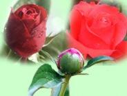 Сколько было лет Аише, когда она вышла замуж за Пророка (мир ему)?